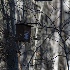 2019.12.07 La Pelegrina-89 (nature.life.street) Tags: naturaleza nature barranco rio riodulce