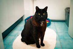 Don 001 (commontropes) Tags: sonya7rii sony a7rii sonyalpha cat cats lensbaby burnside 35mm burnside35 feline