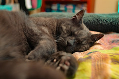 Sean 001 (commontropes) Tags: sonya7rii sony a7rii sonyalpha cat cats lensbaby burnside 35mm burnside35 feline