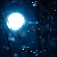 Moonlight Bokeh (trm42) Tags: frozenice bokeh winter moodygram sonya7iii icebokeh focus helsinki bokehballs moonlight moonscape moon dof silvermoon iso12800 finland branches wintermoon ice