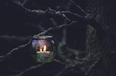 My winter lantern... (esterc1) Tags: vela luz árbol ramas invierno verde smileonsaturday lightanddark bosque colgar lantern