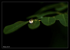 Surface tension (VERODAR) Tags: waterdrop water leaf macrolens macro worldofmacro nature closeup nikon tamron verodar veronicasridar