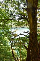 sBs_1907(vac2)_0097-2 (schoolartBYschoolboy) Tags: auvergne puydedome vulcan lake forest