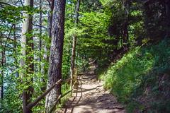 sBs_1907(vac2)_0109-2 (schoolartBYschoolboy) Tags: auvergne puydedome vulcan lake forest