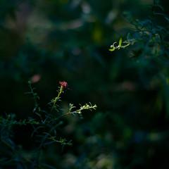 Summer Wildflowers 059 (noahbw) Tags: d5000 dof nikon ryersonwoodsforestpreserve abstract blur depthoffield dreamlike dreamy flowers forest light minimal minimalism natural noahbw quiet shadow square still stillness summer sunlight woods