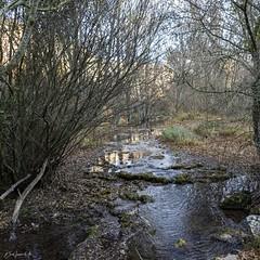 2019.12.07 La Pelegrina-97 (nature.life.street) Tags: naturaleza nature barranco rio riodulce