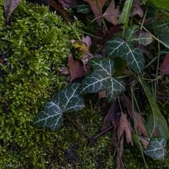 2019.12.07 La Pelegrina-83 (nature.life.street) Tags: naturaleza nature barranco rio riodulce