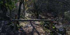 2019.12.07 La Pelegrina-66 (nature.life.street) Tags: naturaleza nature barranco rio riodulce