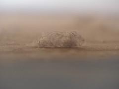 Dust (alanzmarmur) Tags: dust abstract home