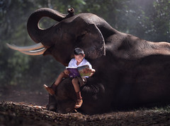 Children read a book and elephant (vithuncivil) Tags: elephant reading school kid book nature boy cambodia teacher child forest white thailand young india asian portrait cute people summer education asia thai beautiful student books family happy travel countryside laos read rural smile beauty green black girl jungle background love caucasian natural face male lifestyle children outside kids learning