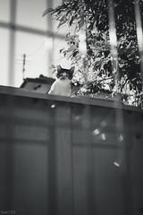 猫 (fumi*23) Tags: ilce7rm3 sony sel35f18f emount 35mm apsccrop feline fe35mmf18 a7r3 animal alley blackandwhite bnw bw cat chat gato neko ソニー ねこ 猫 モノクロ monochrome