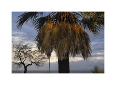 delusive is the view... (giovdim) Tags: winter greece palm leaves sky sea cold light tree wind seasound waves sun fujifilmxf35mmf14