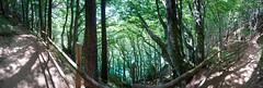 DSC_0060-2 (schoolartBYschoolboy) Tags: auvergne puydedome vulcan lake panorama forest