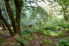 sBs_1907(vac2)_0090-2 (schoolartBYschoolboy) Tags: auvergne puydedome vulcan lake forest