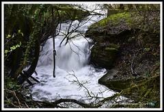 _GSD1360 (nowboy8) Tags: nikon nikond7200 hallington raithby bimble aw river flooding woods st peter togging publicfootpath