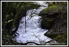 _GSD1357 (nowboy8) Tags: nikon nikond7200 hallington raithby bimble aw river flooding woods st peter togging publicfootpath