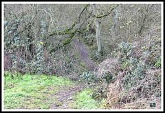 _GSD1352 (nowboy8) Tags: nikon nikond7200 hallington raithby bimble aw river flooding woods st peter togging publicfootpath