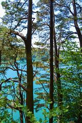 sBs_1907(vac2)_0107-2 copy (schoolartBYschoolboy) Tags: auvergne puydedome vulcan lake forest