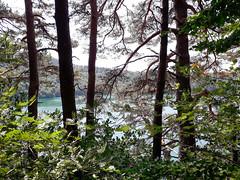 20190720_143159-2 (schoolartBYschoolboy) Tags: auvergne puydedome vulcan lake forest
