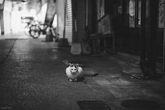 猫 (fumi*23) Tags: ilce7rm3 sony 58mm nokton cosina voigtlander fmount a7r3 animal alley feline neko cat chat gato bw bnw blackandwhite monochrome ねこ 猫 ソニー コシナ ノクトン フォクトレンダー bokeh dof manualfocus