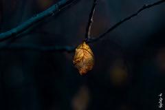 leaf and winter ... (N.Batkhurel) Tags: season winter leaf trees closeup mongolia macro ngc nikon nikondf nikkor 70200mm