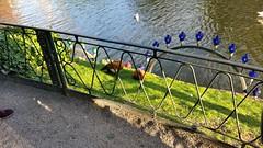 Fancy Ducks (donXfive) Tags: year places copenhagen tivoligardens 2015 july month denmark