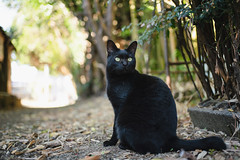 猫 (fumi*23) Tags: ilce7rm3 sony street sel35f18f a7r3 animal alley cat chat gato neko katze bokeh dof depthoffield emount 35mm ねこ 猫 ソニー