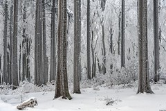 *winter forest* (Albert Wirtz @ Landscape and Nature Photography) Tags: albertwirtz winterwald hunsrück germany erbeskopf buche beech beechforest tree baum nature natura naturaleza natur landscape landschaft fineart naturefineart landscapefineart frozen frost hoarfrost raureif snow schnee rheinlandpfalz rhinelandpalatinate allemagne deutschland wood holz cold kalt nikon d700 morbach thranenweier winter paisaje paysage paesaggio campo campagna campagne