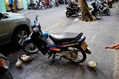 DSC07613 (vegatenor) Tags: sony a7m3 tamron 35mm f28 fe di iii osd m 12 vietnam hanoi