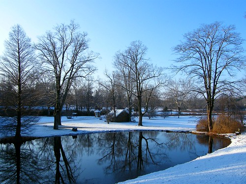 Winter at Ringwood Park
