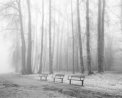 a tale of three benches (bluechameleon) Tags: barnetmarinepark sharonwish blackandwhite burnaby fog frost landscape nature parkbenches path sharonwishphotography trees winter barebranches moody lonely melancholic