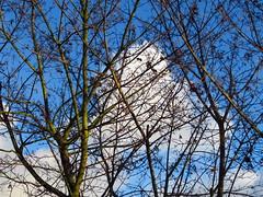 Morgendlicher Winterhimmel (Bea tedo) Tags: winterhimmel winter himmel wolken blau grau zweige bäume sky clouds blue grey sun trees natur