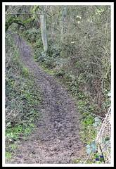 _GSD1353 (nowboy8) Tags: nikon nikond7200 hallington raithby bimble aw river flooding woods st peter togging publicfootpath