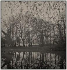 troncs d'arbres refletes dans l'eau. (devonaldjohndavies) Tags: agfa isolyiii apotar 60mm39 ilford 3200 delta pmk pyro taffriver reflections trees diy film scanning development square format