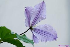 DSC06052 (Ezzo33) Tags: nammour ezzat ezzo33 france aquitaine 33 bordeaux parc jardin sony rx10m3 fleur fleurs flower flowers rouge red mauve pink rose yelow jaune wihte blanc bleu bleue réserve