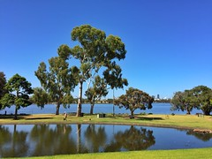 Tree reflections (sander_sloots) Tags: gum trees gombomen bomen maylands perth swan river reflection weerspiegeling reflectie iphone6 picture foto western australia iphone