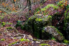 Waldmotive im Herbst_24-11-2019_0127 (Pixel-World) Tags: fototour spaziergang süntel wald weserbergland hessischoldendorf niedersachsen deutschland