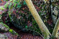 Waldmotive im Herbst_24-11-2019_0126 (Pixel-World) Tags: fototour spaziergang süntel wald weserbergland hessischoldendorf niedersachsen deutschland