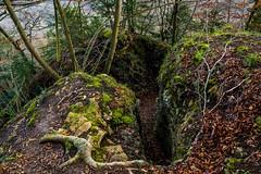 Waldmotive im Herbst_24-11-2019_0124 (Pixel-World) Tags: fototour spaziergang süntel wald weserbergland hessischoldendorf niedersachsen deutschland