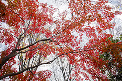 * K A Y E D E * (Jim Mayes) Tags: canon eos digital zoom 2470mm ef ef2470mmf4lisusm 大阪市立長居植物園