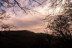 Waldmotive im Herbst_24-11-2019_0123 (Pixel-World) Tags: fototour spaziergang süntel wald weserbergland hessischoldendorf niedersachsen deutschland