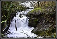 _GSD1358 (nowboy8) Tags: nikon nikond7200 hallington raithby bimble aw river flooding woods st peter togging publicfootpath