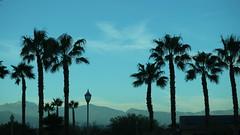 December 13, 2019 (28) (gaymay) Tags: california desert gay love palmsprings riversidecounty coachellavalley sonorandesert lodge palmtrees