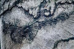 Waldmotive im Herbst_24-11-2019_0032 (Pixel-World) Tags: fototour spaziergang süntel wald weserbergland hessischoldendorf niedersachsen deutschland