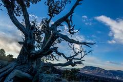 A-0945 (markbyzewski) Tags: sunrise palmerpark colorado coloradosprings tree sun cloud pikespeak mountain grass