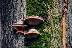 Waldmotive im Herbst_24-11-2019_0028 (Pixel-World) Tags: fototour spaziergang süntel wald weserbergland hessischoldendorf niedersachsen deutschland