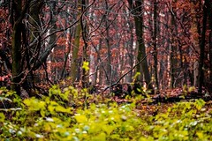 Waldmotive im Herbst_24-11-2019_0027 (Pixel-World) Tags: fototour spaziergang süntel wald weserbergland hessischoldendorf niedersachsen deutschland