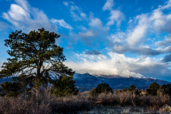 A-0939 (markbyzewski) Tags: sunrise palmerpark colorado coloradosprings tree sun cloud pikespeak mountain grass