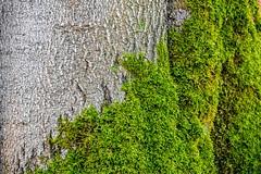 Waldmotive im Herbst_24-11-2019_0018 (Pixel-World) Tags: fototour spaziergang süntel wald weserbergland hessischoldendorf niedersachsen deutschland