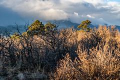 A-0930 (markbyzewski) Tags: sunrise palmerpark colorado coloradosprings tree sun cloud pikespeak mountain grass